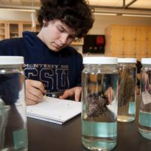 Male student takes notes in a marine science laboratory at California State University, Monterey Bay.