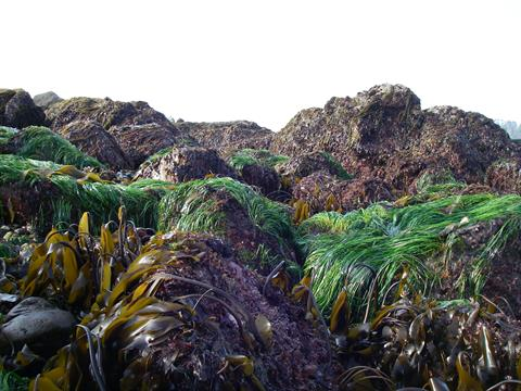 kelp and seagrass on Pacific Coast
