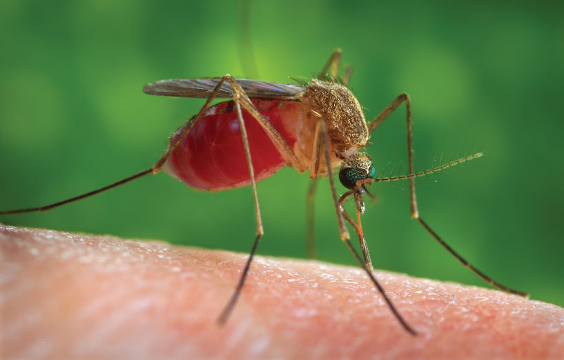 Exploring Ways to Stop the Spread of Malaria